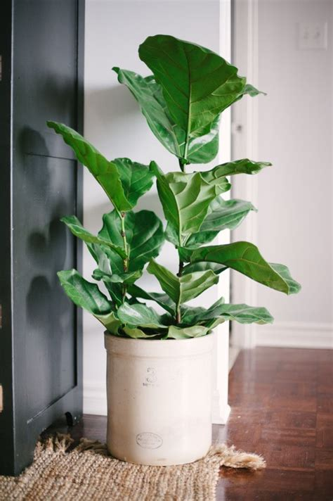 house plants no light 25 best ideas about apartment plants on pinterest