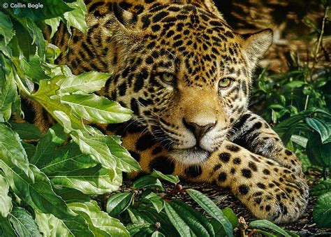 imagenes de paisajes salvajes im 225 genes arte pinturas paisajes salvajes de animales
