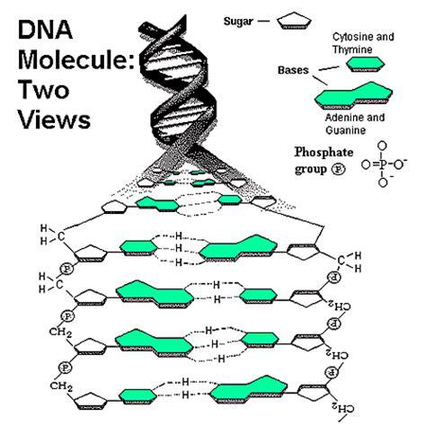 sketchbook lengkap dna molecule two views