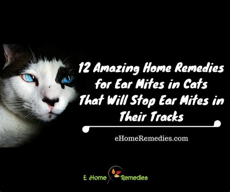 25 best ideas about cat ear mites on ear