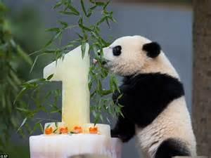 happy birthday bao bao huge crowds flock   washington zoos giant panda cub