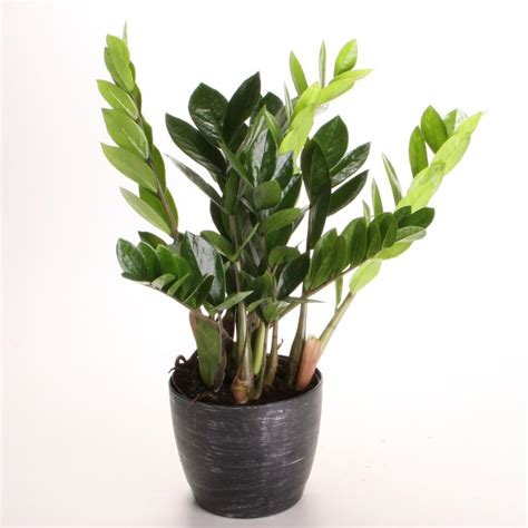 Indoor Houseplants | indoor plants low light hgtv