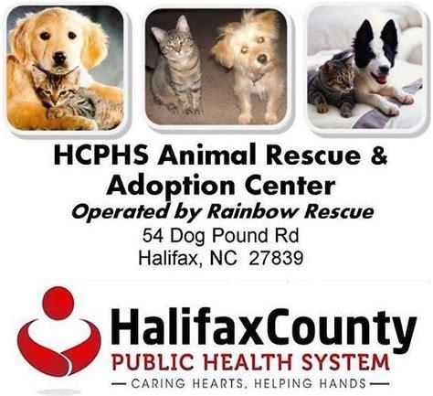 animal rescue home rainbow animal rescue carolina