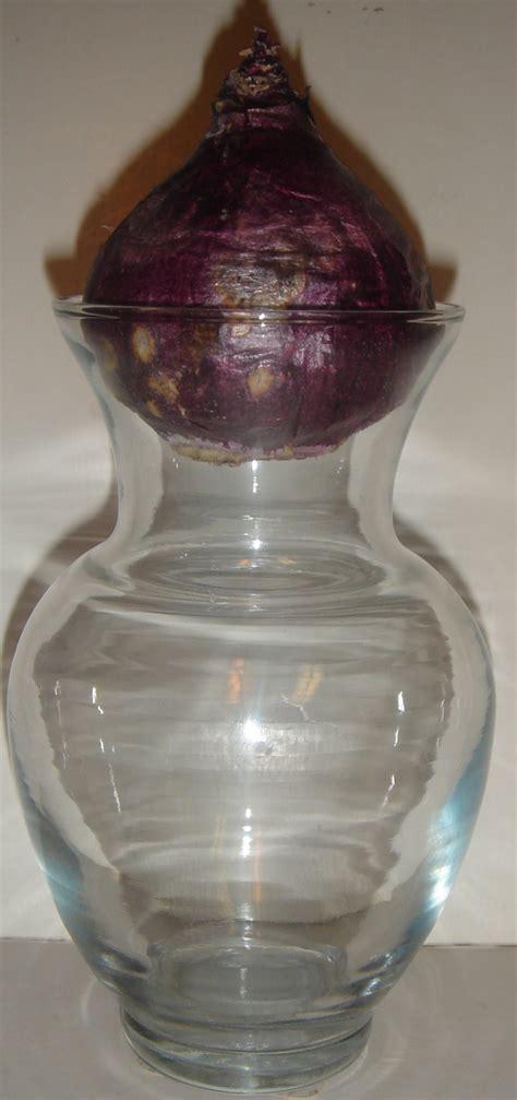 Glass Jar Vases by Vintage Clear Glass Forcing Vase Jar Vases