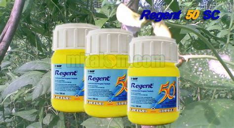 mengendalikan hama ulat  insektisida regent  sc