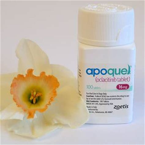 allergy medicine apoquel is apoquel safe for dogs with allergies chasing tales