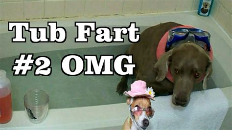 farting in the bathtub bath tub fart my funny dog farts underwater two dogs enter