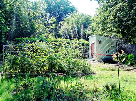 the backyard homestead return of the backyard homestead dreams of simple