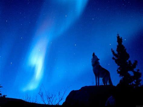 imagenes de lobos taringa fondos de pantalla universo y otros im 225 genes taringa