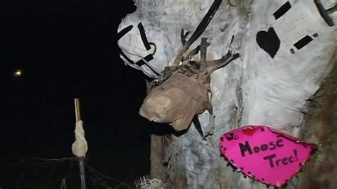 new year paper mache paper mache moose appears on napa s tree that was