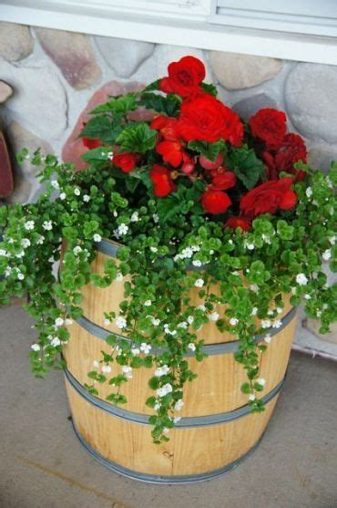 Barrel Planter Combo by Barrel Planter Gardening Planters O