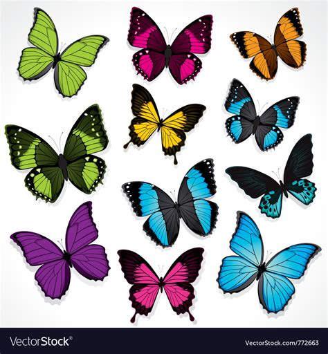 colorful butterflies colorful butterflies pictures www pixshark images