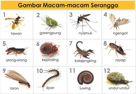 Binatang Kecil Di Sekitar Kita gambar jenis macam hewan serangga freewaremini