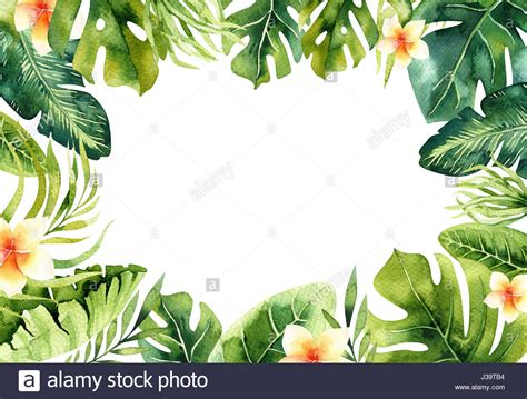 plant background watercolor tropical plants background