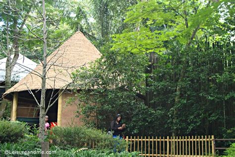 singapore zoo new year 2015 africa in singapore zoo leisure and me