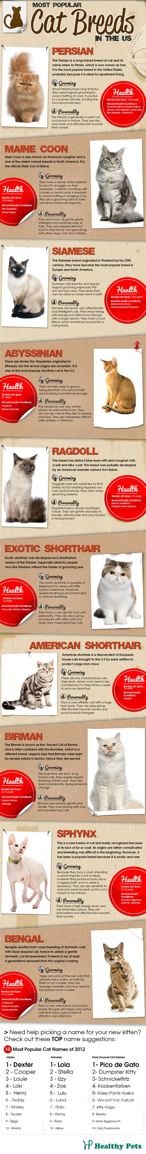 most popular breeds in the us the most popular cat breeds in the us