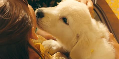 marshmello dog video watch a girl and her dog s emotional bond in marshmello s