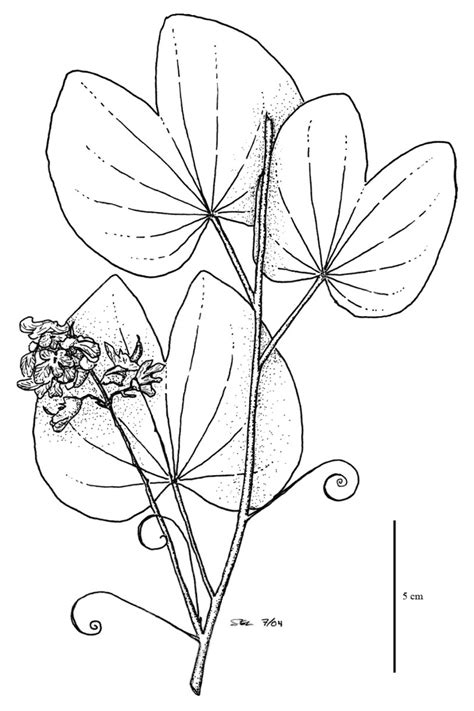 tropical leaves coloring pages drawn rainforest jungle pencil and in color drawn