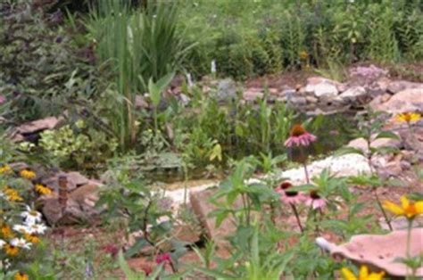backyard frog pond turn your backyard into a wildlife habitat frogs are green