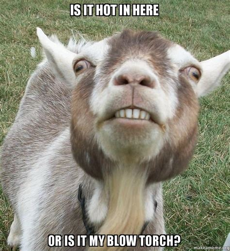 Billy Goat Meme - billy goat meme 28 images billy goat meme 1 blank