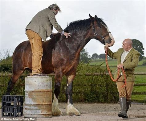 what is the largest breed what is the largest breed in the world how are they different from other types