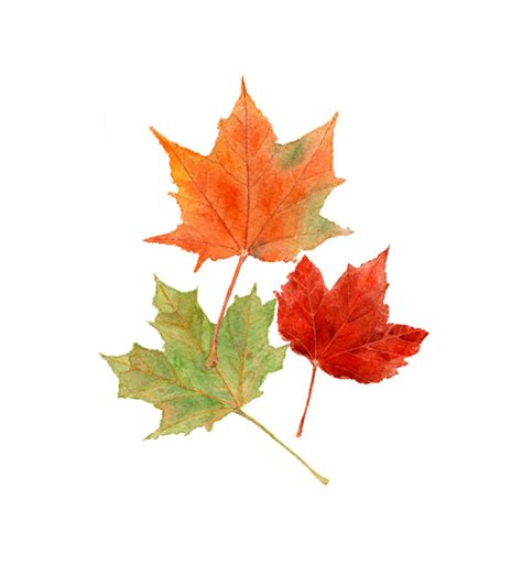 printable autumn leaves etsy treasuries southwestdesertlover page 11