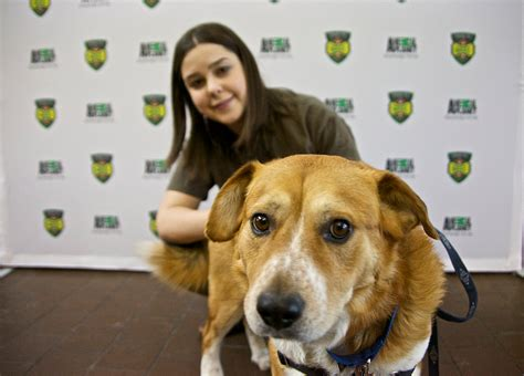 puppy bowl adoptions animal planet s 2015 road to the puppy bowl promotes pet adoptions across the