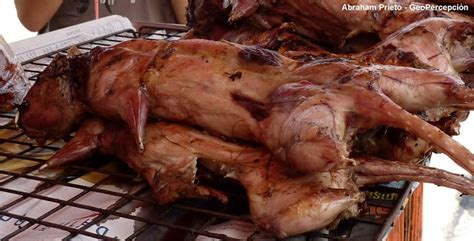 imagenes ratas asquerosas comidas extravagantes si las hay im 225 genes taringa