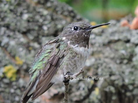 hummingbird blogs hummingbird site of canada home of
