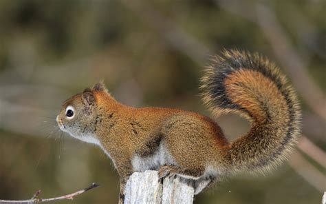 beautiful wallpapers squirrels wallpaper