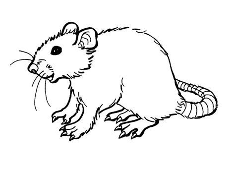 color pages free printable rat coloring pages for