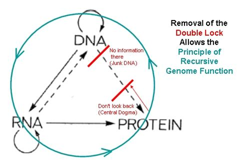 the principle of recursive genome function supplementary