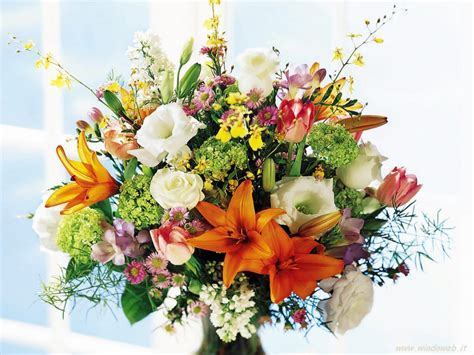 foto fiori foto fiori recisi