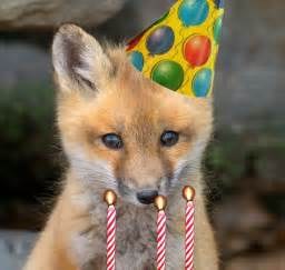 15 best curious fox s 1st birthday images on pinterest