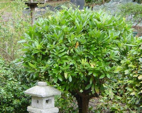 garten japanisch pflanzen garden plants of japan pdf