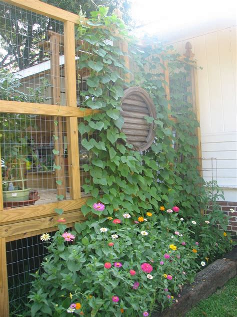 deck privacy wall with wire screen for plants garden