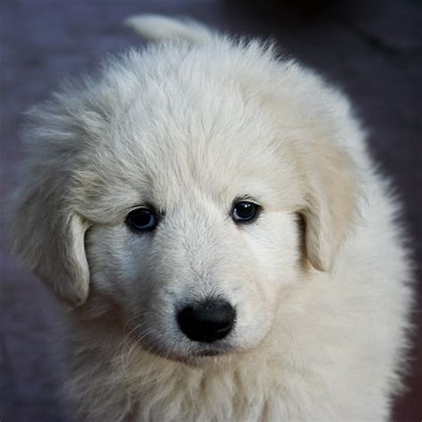 cutest puppies in the whole world the cutest puppies in the world 18 photos