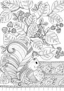 coloriage adulte automne champignons 7