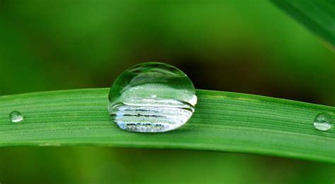 irrigare il giardino quando irrigare il giardino di casa domuseconomy