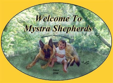 german shepherd puppies ct for sale german shepherds for sale in connecticut ct dogs for sale breeds picture