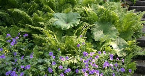 Farn Im Garten by Blattschmuckpflanzen Faszinierende Farne Mein Sch 246 Ner