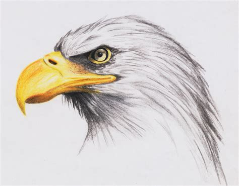 eagle drawing new calendar template site