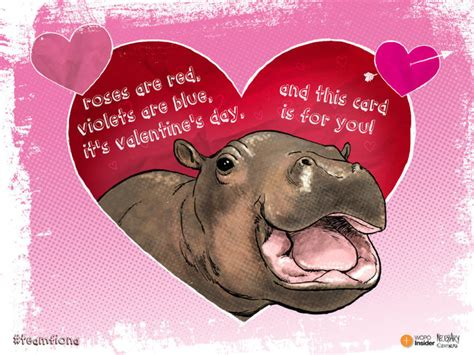 valentines day cincinnati cincinnati zoo s baby hippo fiona will you be our