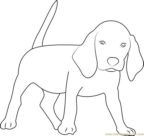 Beagle Coloring Pages Beagle Coloring Page Free Dog Coloring Pages by Beagle Coloring Pages