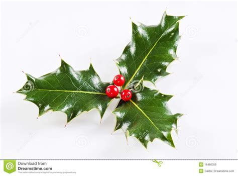 Christmas Plant Decoration Holly Leaf With Red Berries Royalty Free Stock Images