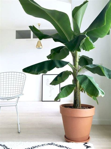amazing artificial indoor plants ideas  give