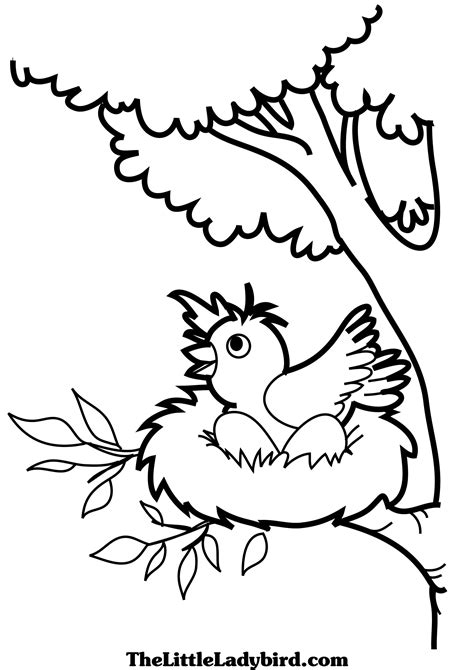 coloring pages of birds in a nest free birds coloring pages thelittleladybird com