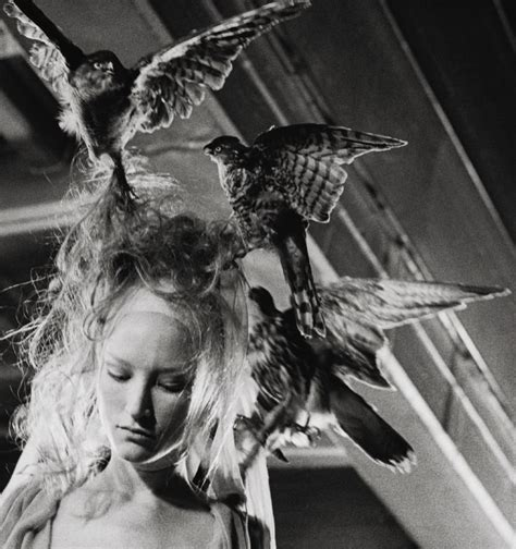 Radical Eye Mc 1000 images about birds on fashion editorials wings and white doves
