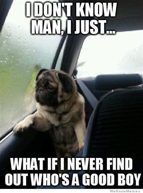 Pug Birthday Meme - funny pug memes