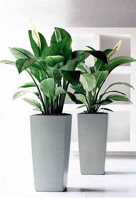 indoor plant pot plants broadway plantscapers